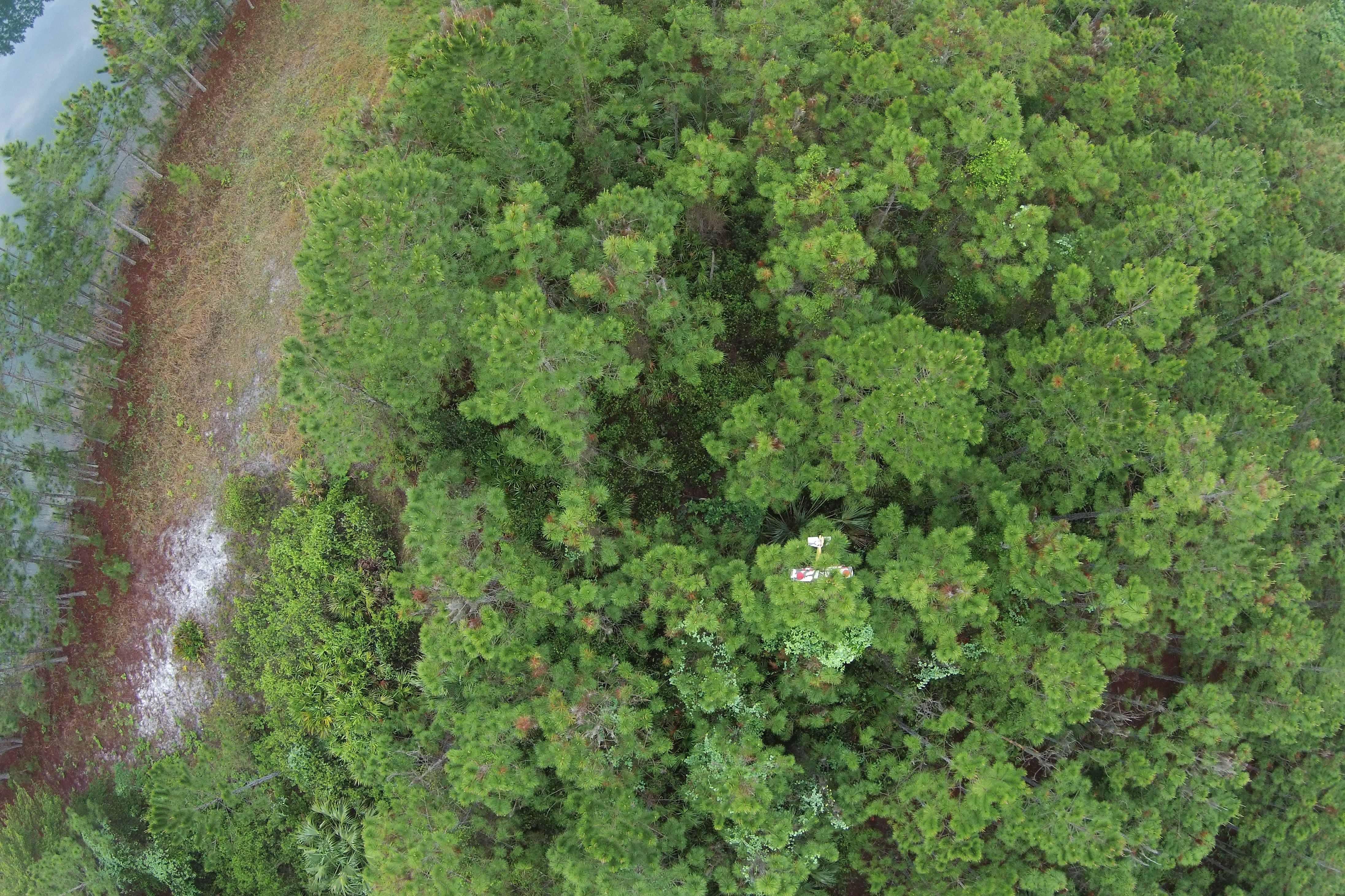 Kenny's plane in tree.JPG