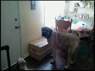 My dog Clark