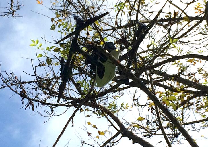 Inspire in tree