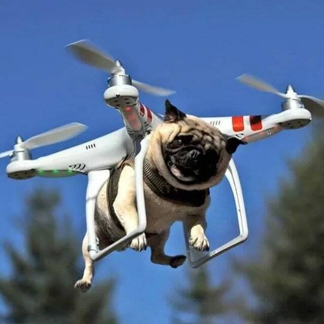 Drone-take-your-dog-for-a-walk.jpg