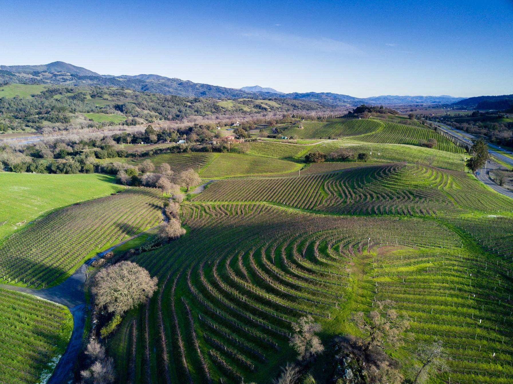 Northern California vineyards