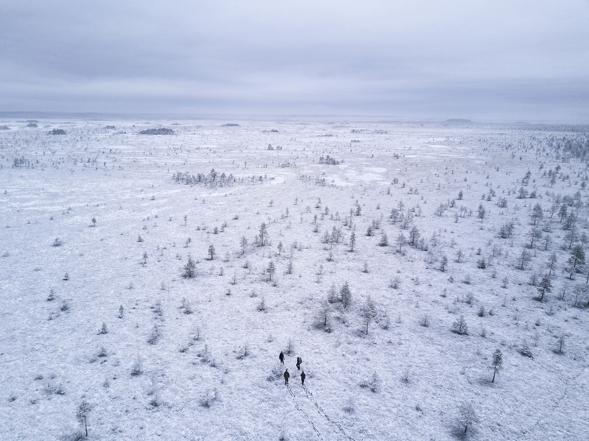 Soomaa bog, Estonia.
