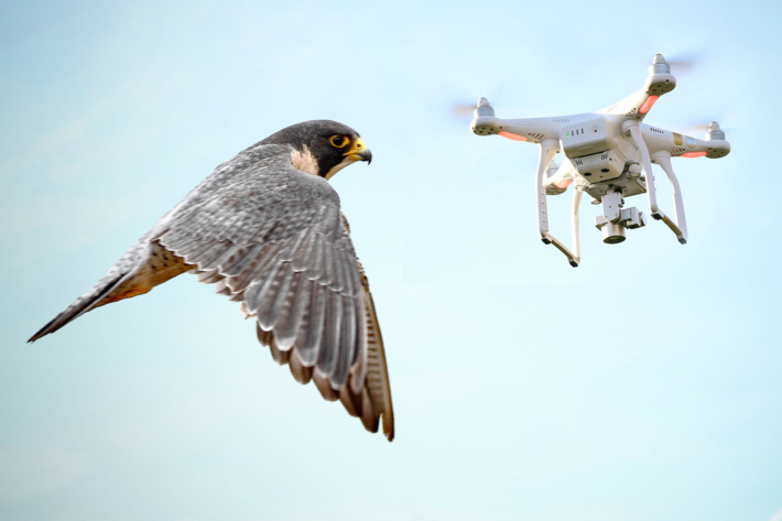 Some Are Only Furious No I Meant Curious Have Fun Enjoy Your Drone