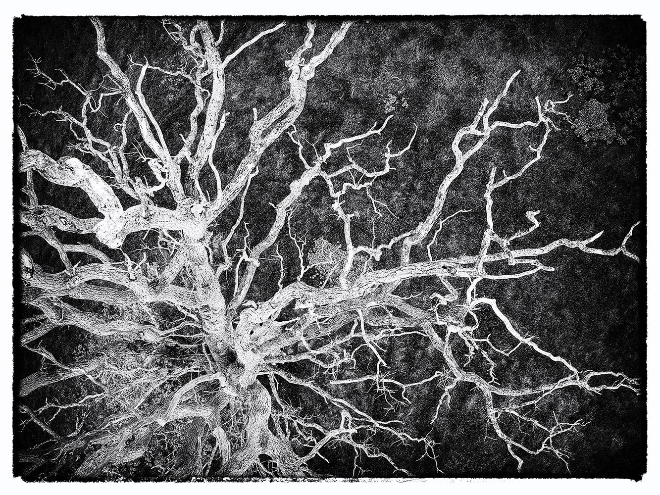 Dead Tree 1.jpg