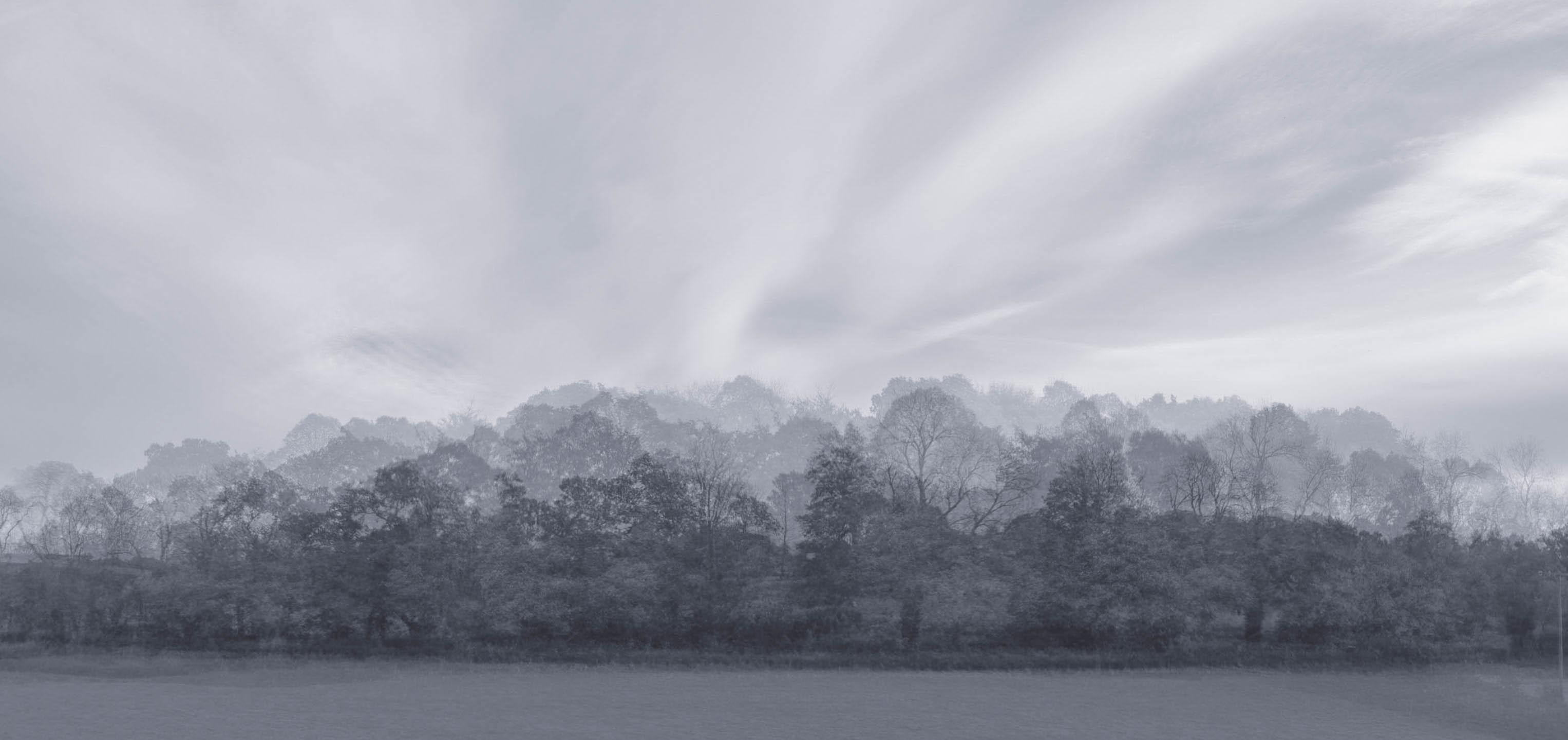 Ghost Trees.jpg