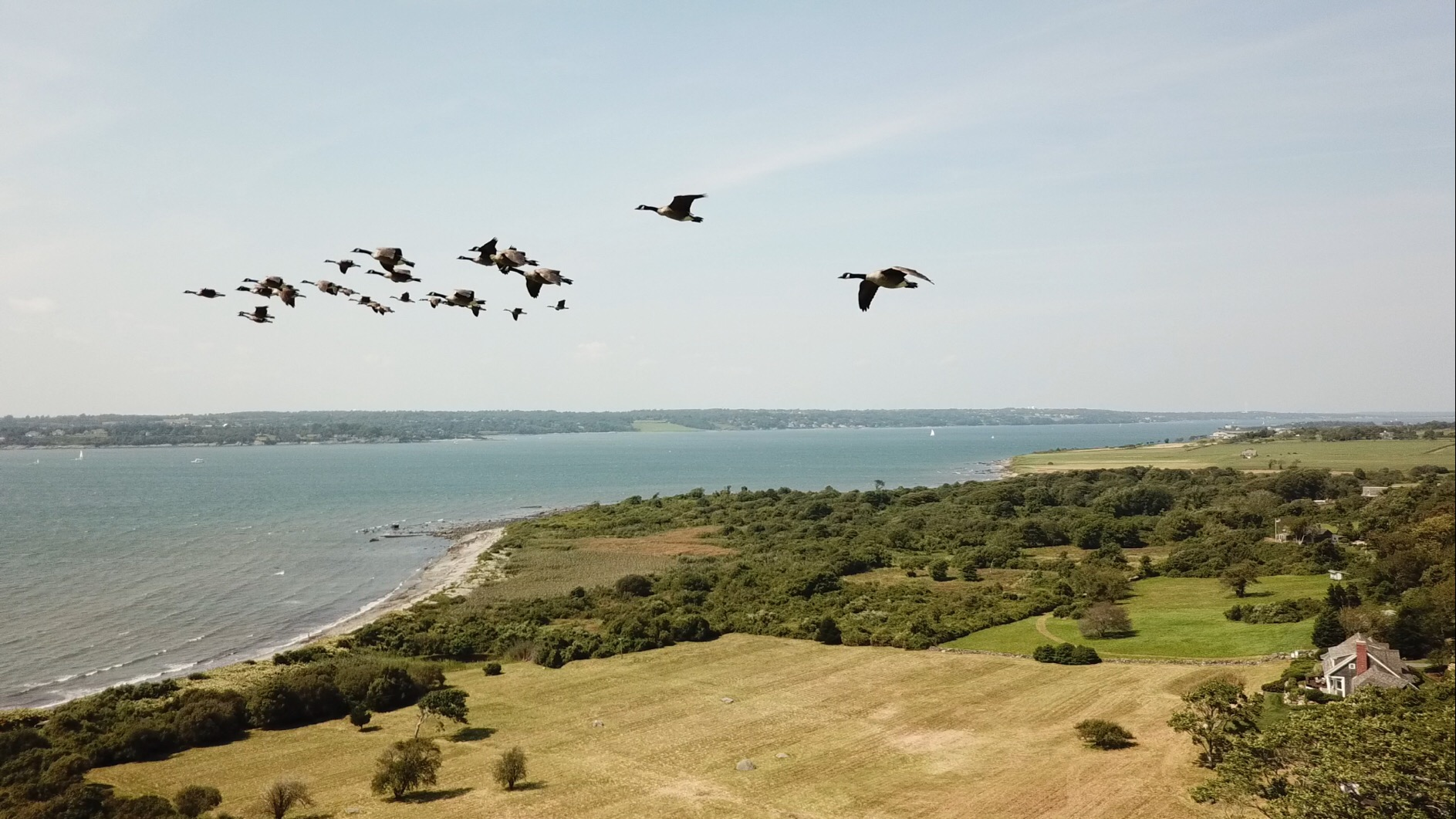 Canadian geese over the Sakonnet River