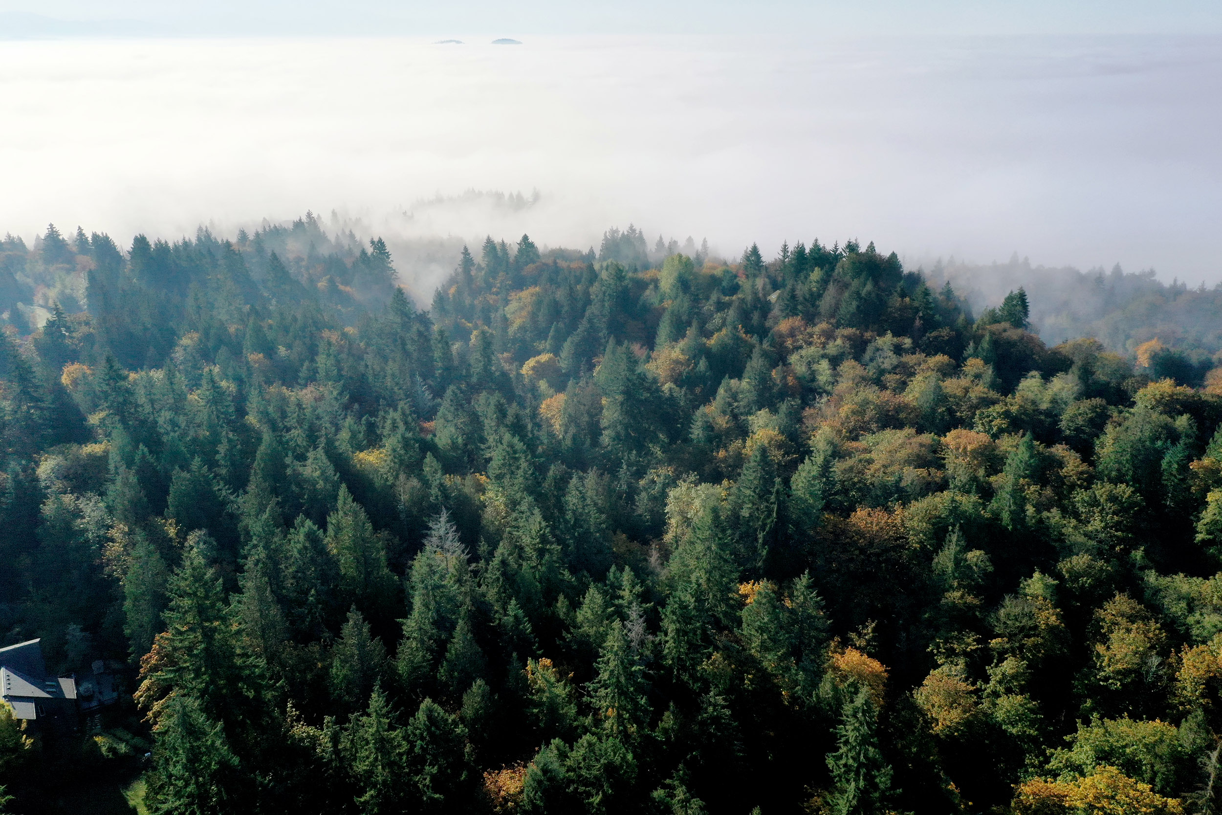 2500 HDR Fog and Trees.jpg