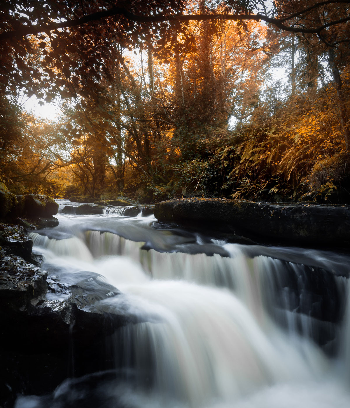 Autumn-in-Ireland-resized.jpg