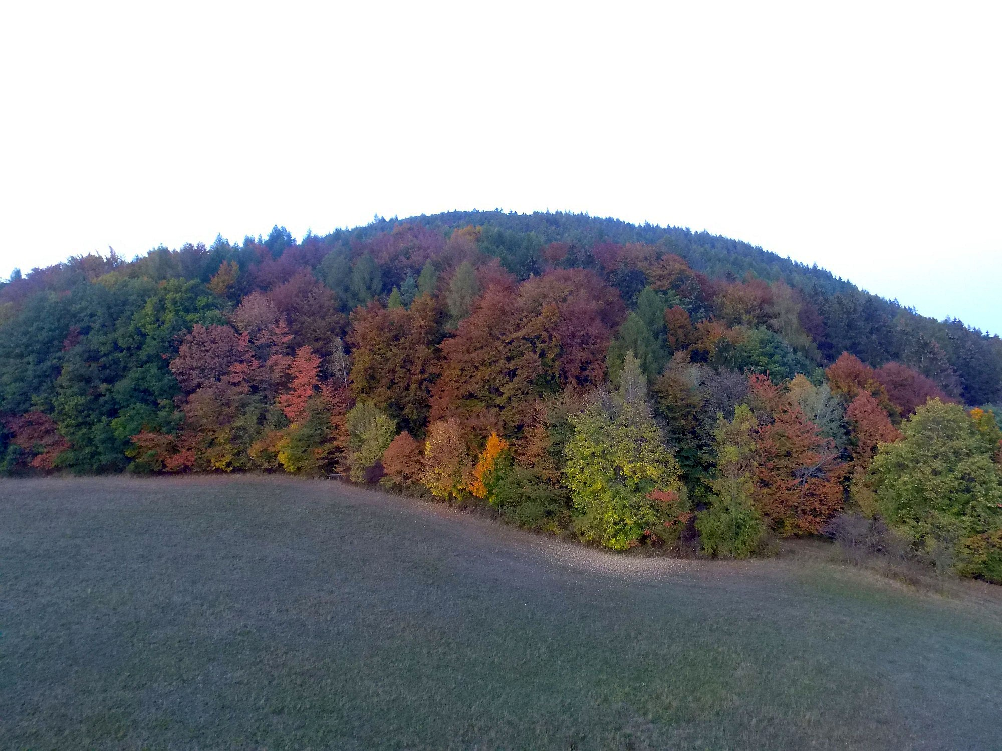 Colors of autumn near the forest