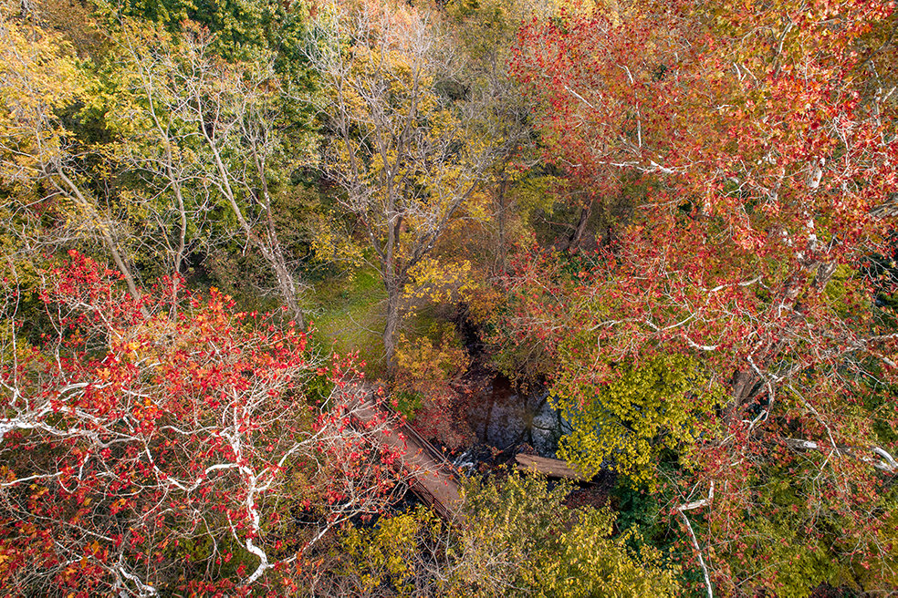 Looking down between the colorful autumn trees at the crossing over the creek