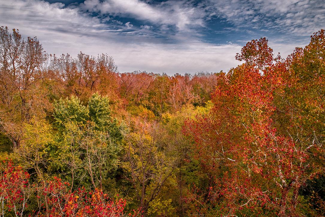 Autumn trees close to peak season from the treetops
