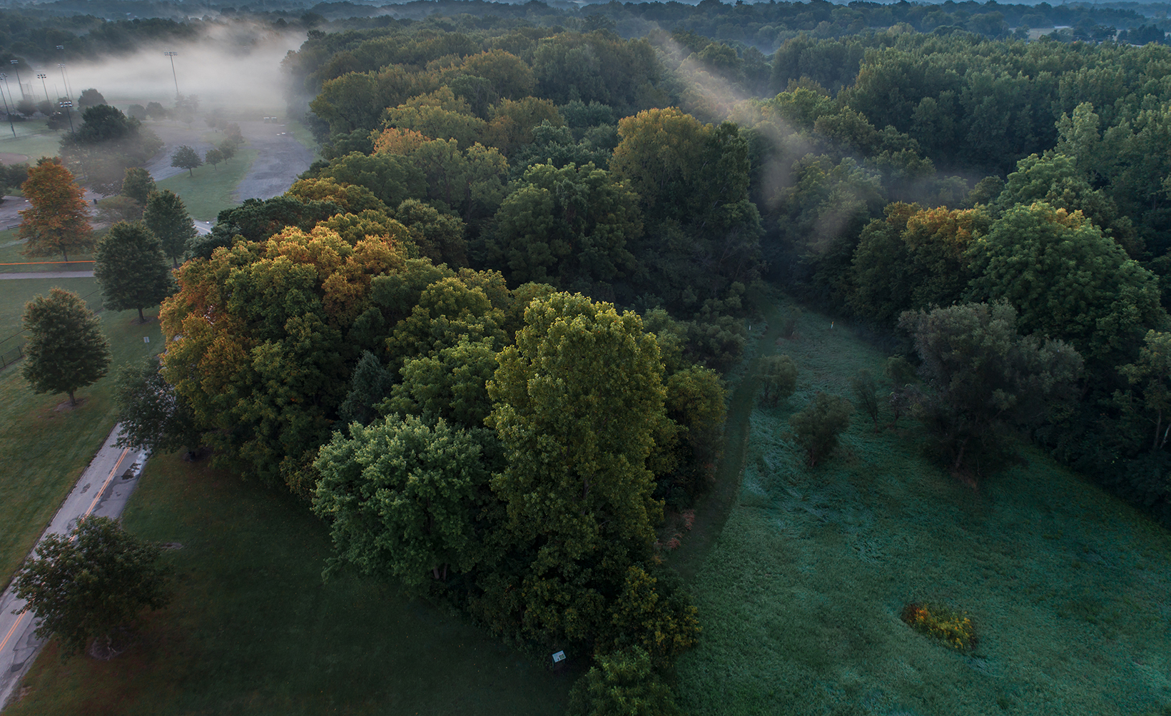 Mist and the beginning of autumn with yellows starting to show