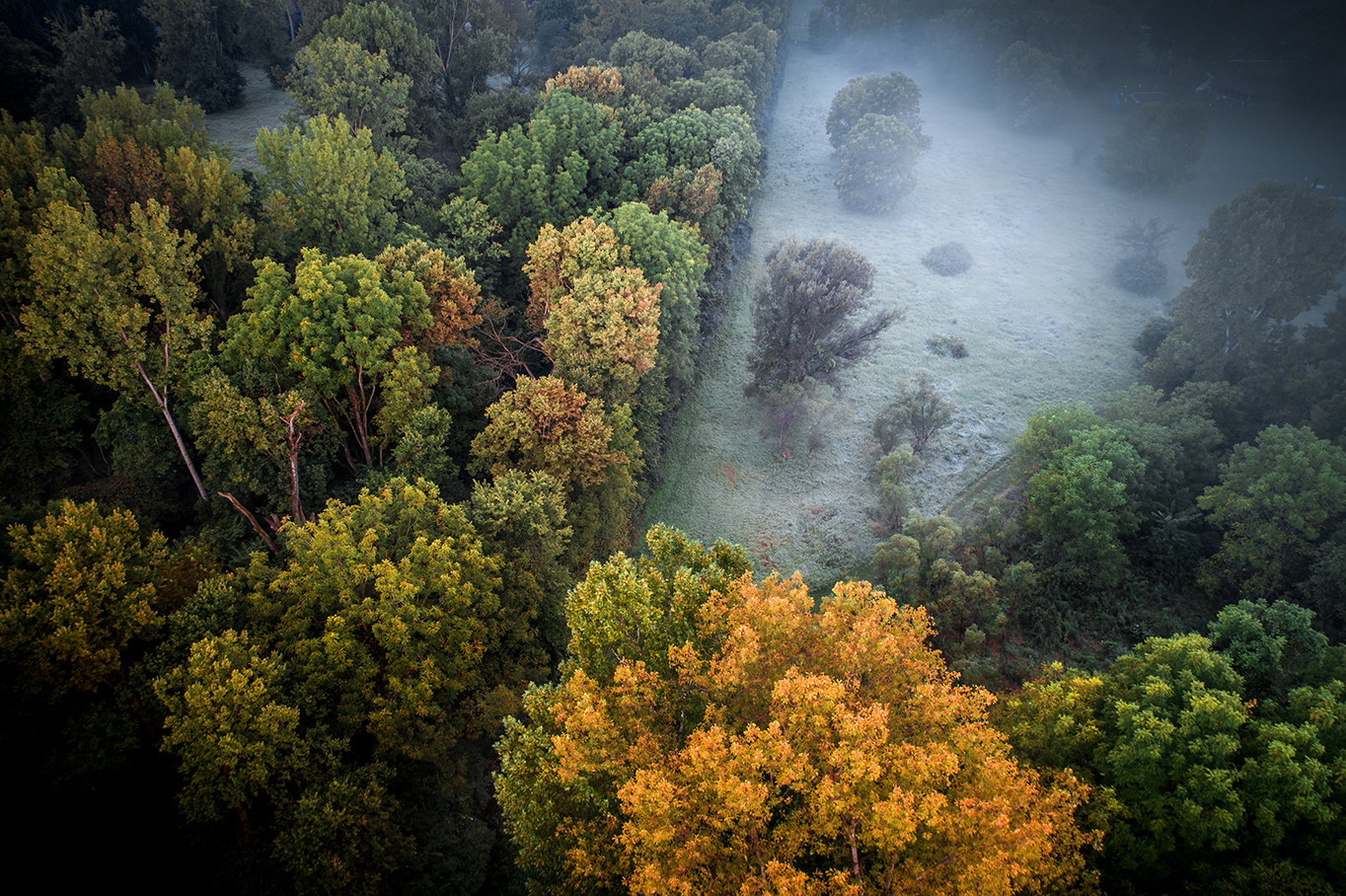 Autumn beginning to show signs in the trees on a foggy morning