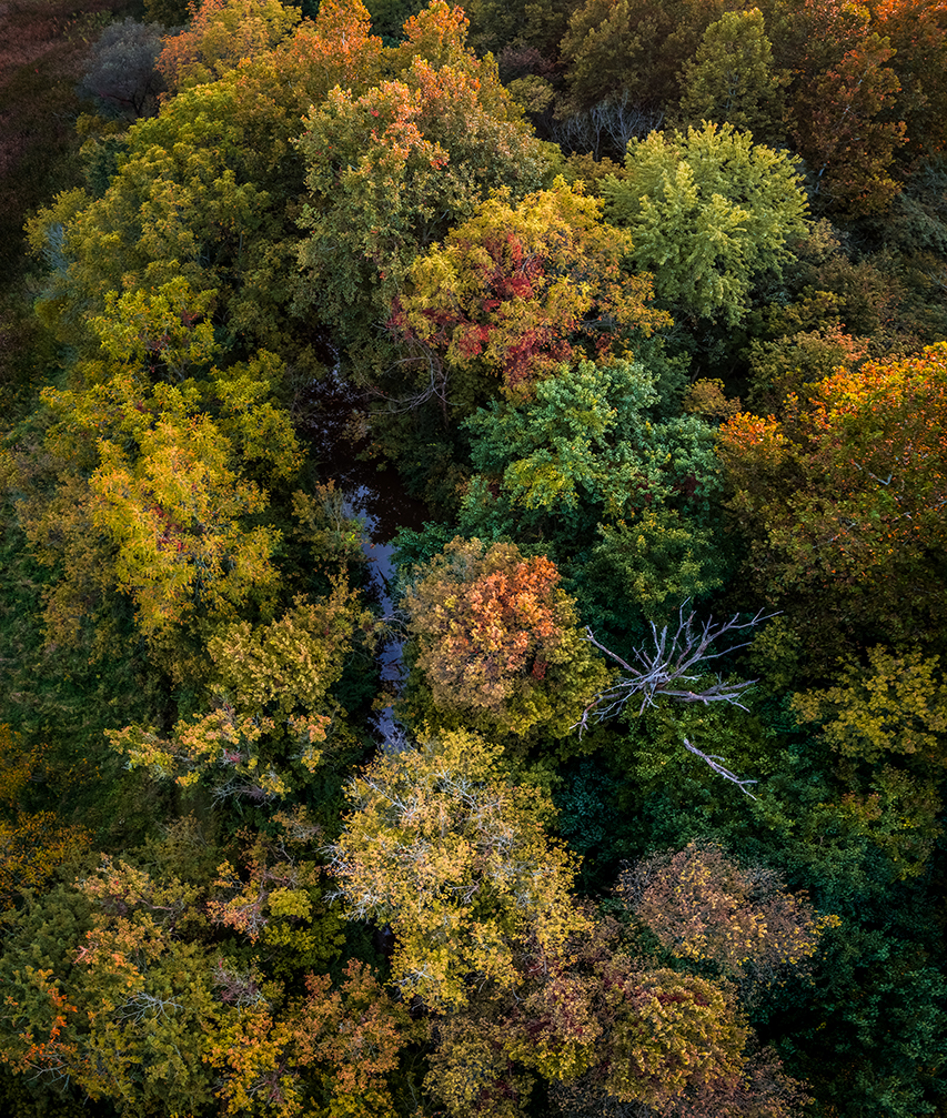 Looking down on colorful autumn trees in the evening