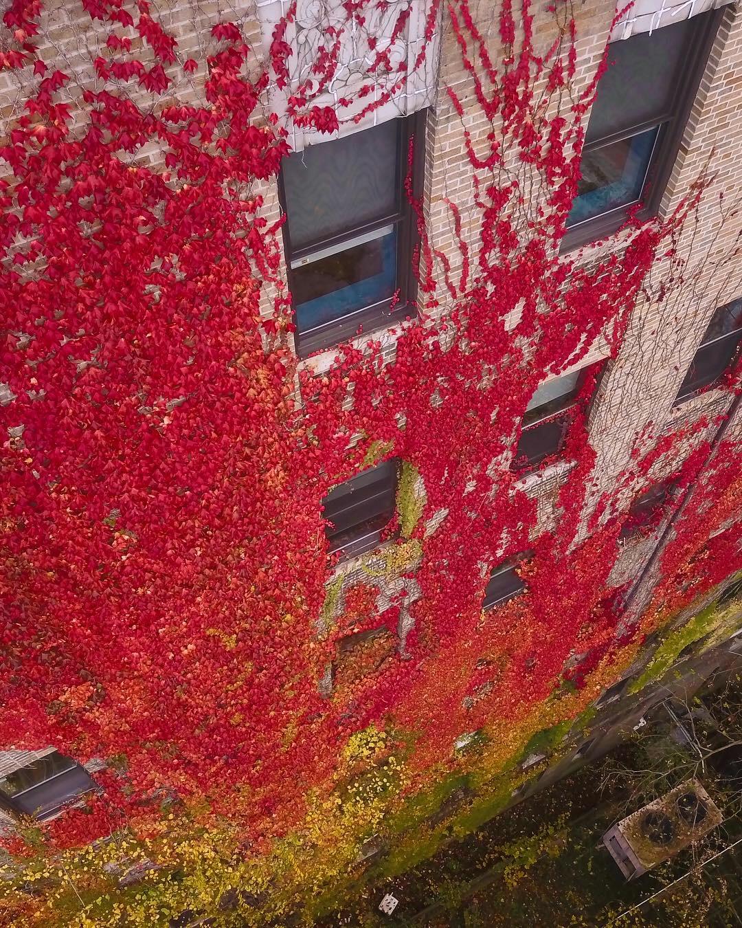 Bayley Seton Hospital (Abandoned), Staten Island, NY