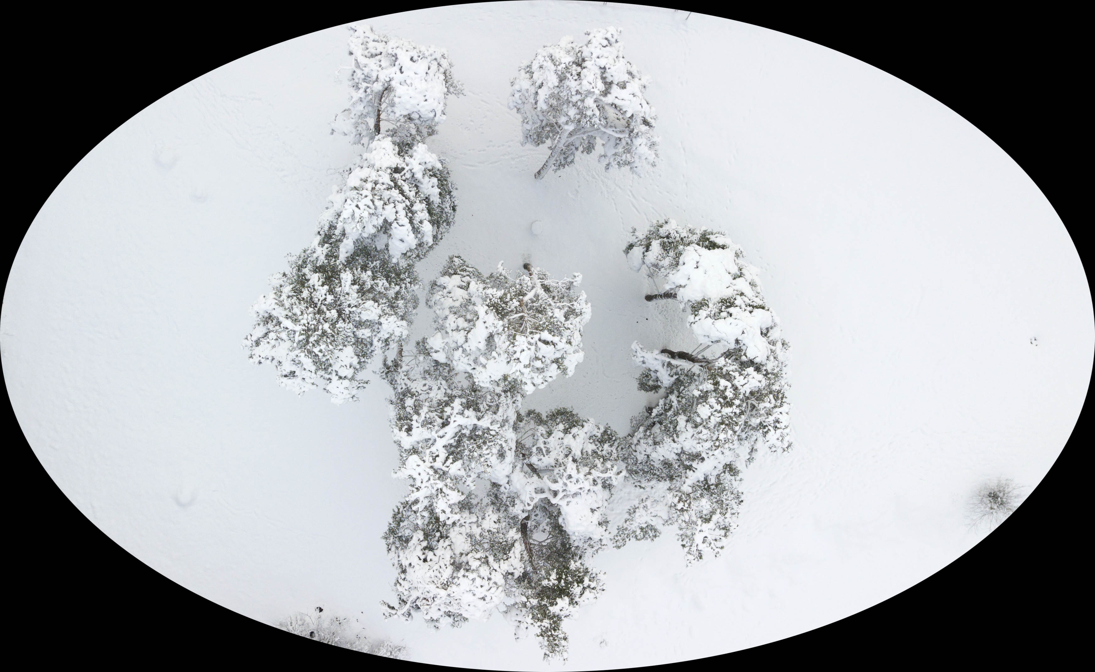 Frosted trees.jpg