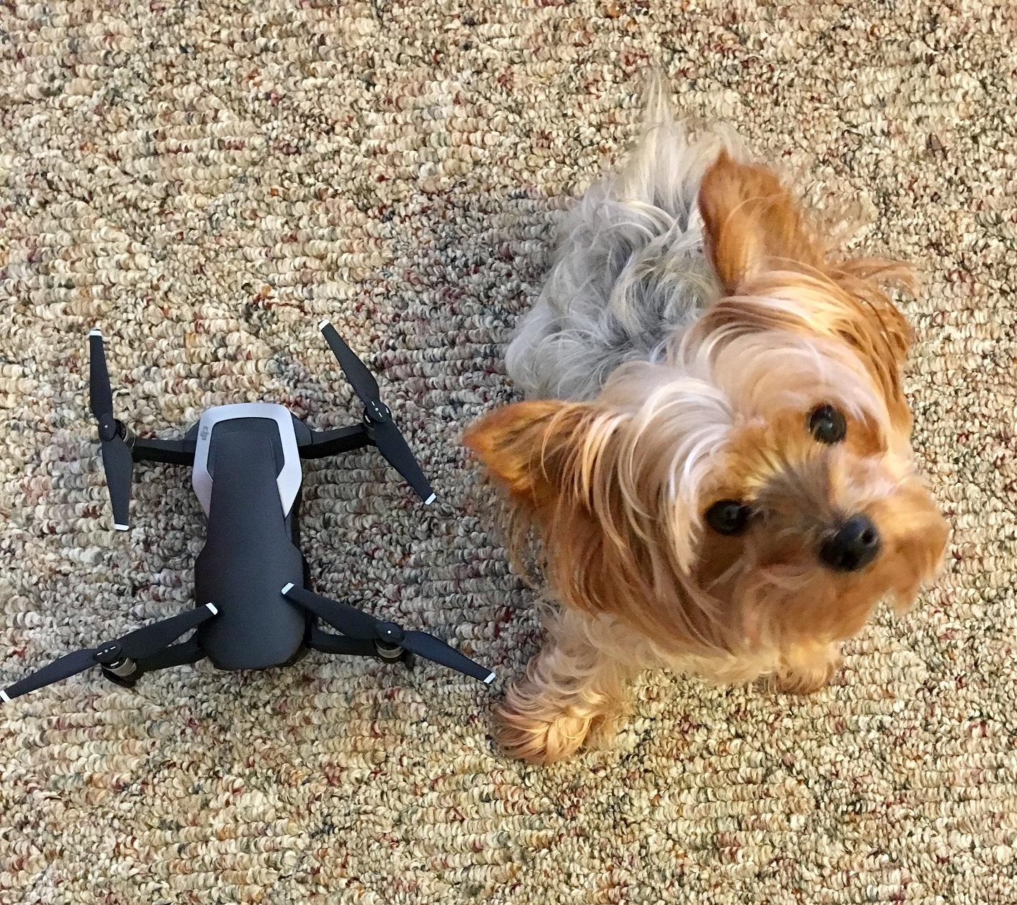 dog-drone.jpg