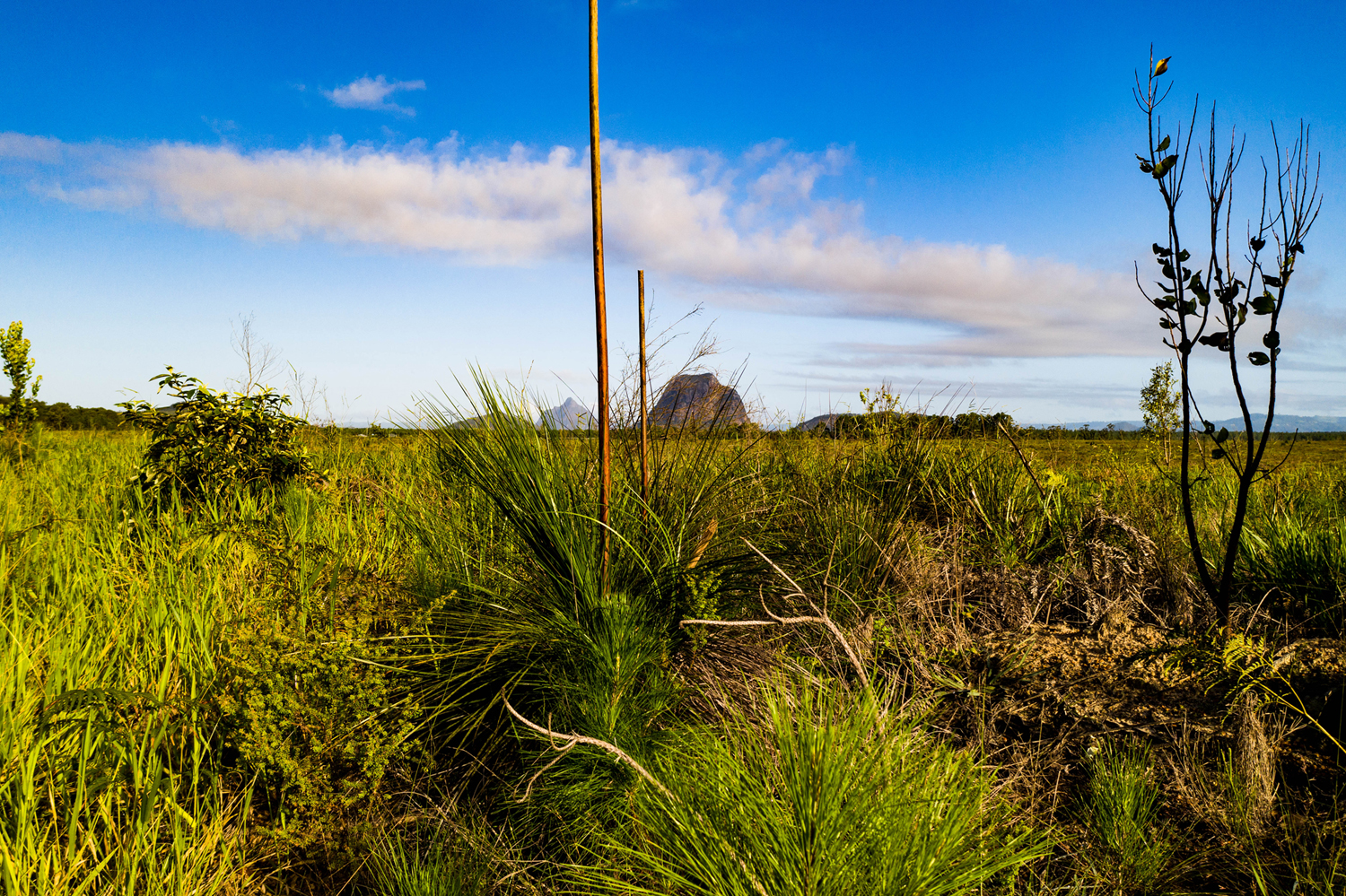 Glass House Mountains from low level