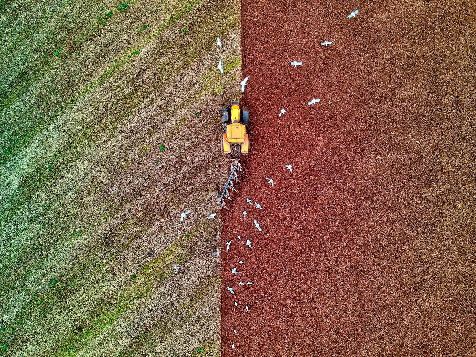 RZ-Flock-Of-Seagulls-sml.jpg