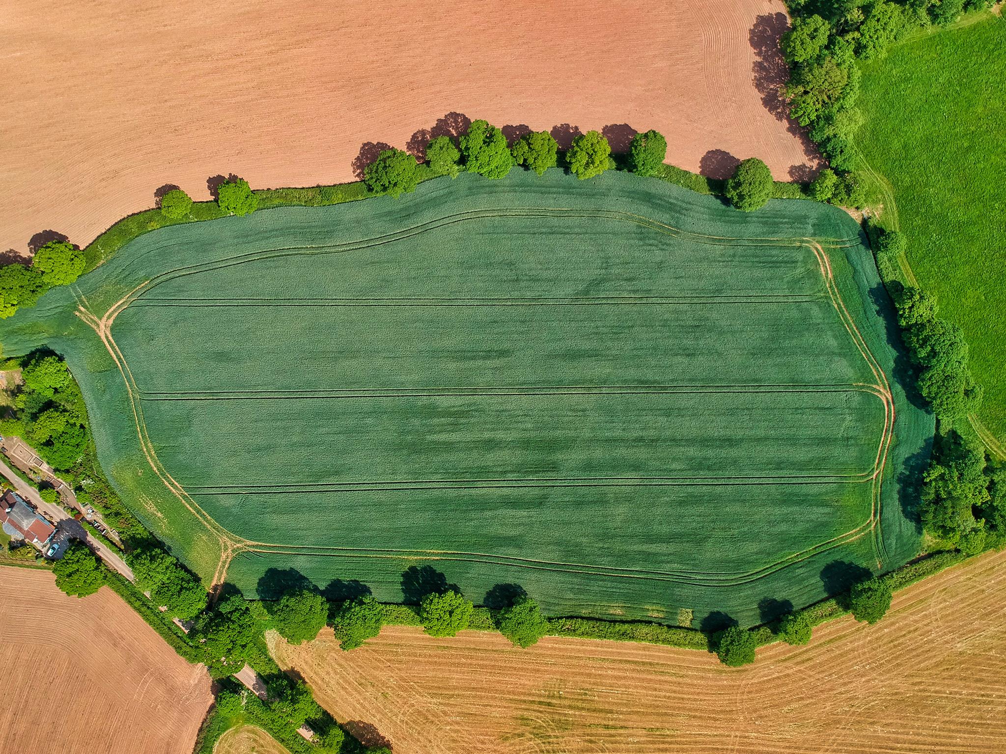 RZ-Green-Green-Grass.jpg