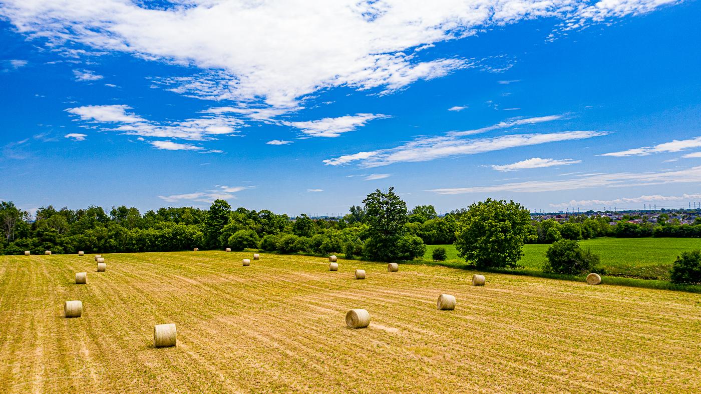 Hay is in 20200625.jpg