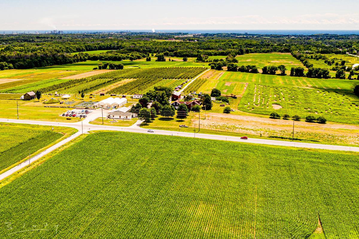 Corn fields near Pingles 20200724-41.jpg
