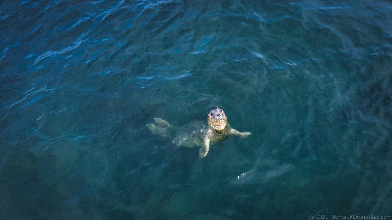 Little Seal in Long Island Sound