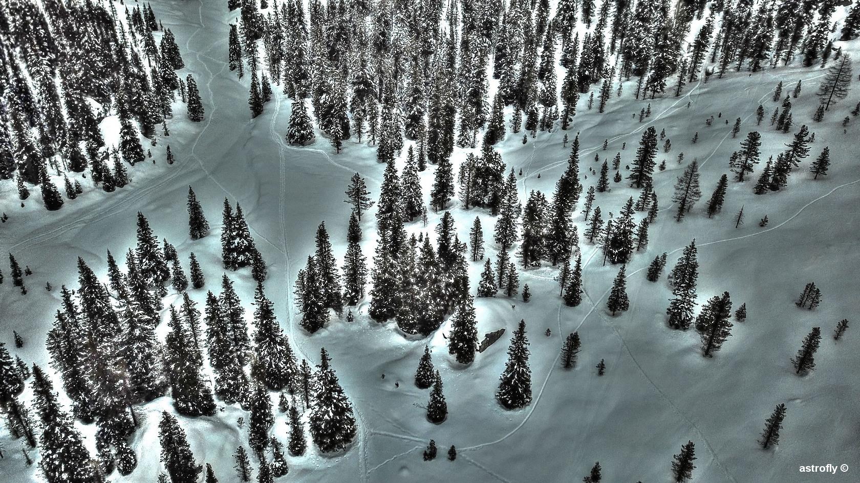 Trees_0077ta.jpg